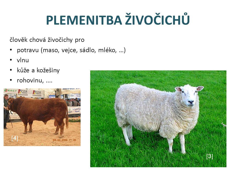 PLEMENITBA ŽIVOČICHŮ člověk chová živočichy pro potravu (maso, vejce, sádlo, mléko, …) vlnu kůže a kožešiny rohovinu,....