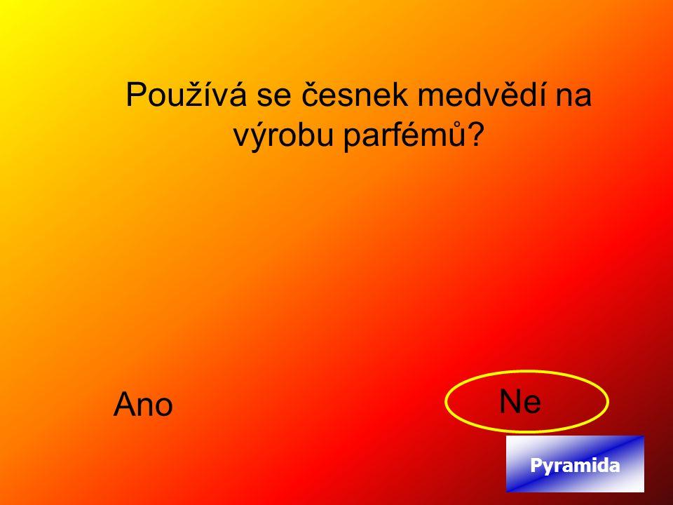 Používá se česnek medvědí na výrobu parfémů Ano Ne Pyramida