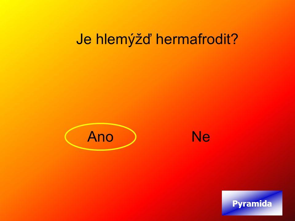Je hlemýžď hermafrodit AnoNe Pyramida