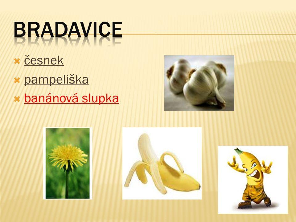  česnek  pampeliška  banánová slupka
