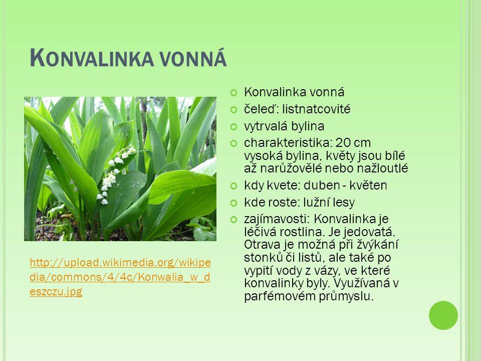 K ONVALINKA VONNÁ Konvalinka vonná čeleď: listnatcovité vytrvalá bylina charakteristika: 20 cm vysoká bylina, květy jsou bílé až narůžovělé nebo nažloutlé kdy kvete: duben - květen kde roste: lužní lesy zajímavosti: Konvalinka je léčivá rostlina.