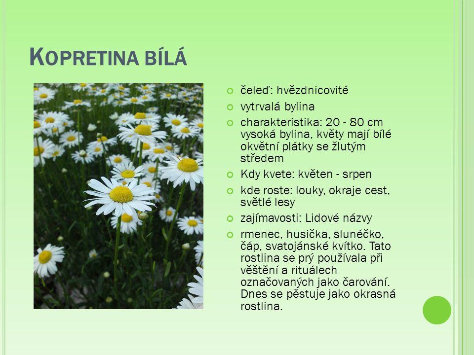K OPRETINA BÍLÁ čeleď: hvězdnicovité vytrvalá bylina charakteristika: 20 - 80 cm vysoká bylina, květy mají bílé okvětní plátky se žlutým středem Kdy kvete: květen - srpen kde roste: louky, okraje cest, světlé lesy zajímavosti: Lidové názvy rmenec, husička, slunéčko, čáp, svatojánské kvítko.
