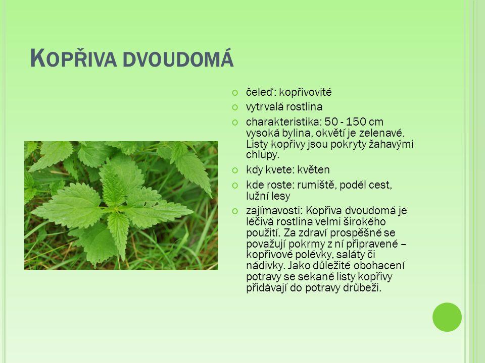 K OPŘIVA DVOUDOMÁ čeleď: kopřivovité vytrvalá rostlina charakteristika: 50 - 150 cm vysoká bylina, okvětí je zelenavé.