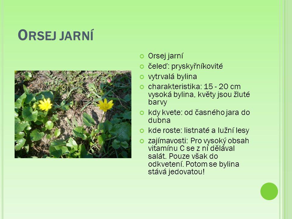 O RSEJ JARNÍ Orsej jarní čeleď: pryskyřníkovité vytrvalá bylina charakteristika: 15 - 20 cm vysoká bylina, květy jsou žluté barvy kdy kvete: od časného jara do dubna kde roste: listnaté a lužní lesy zajímavosti: Pro vysoký obsah vitamínu C se z ní dělával salát.