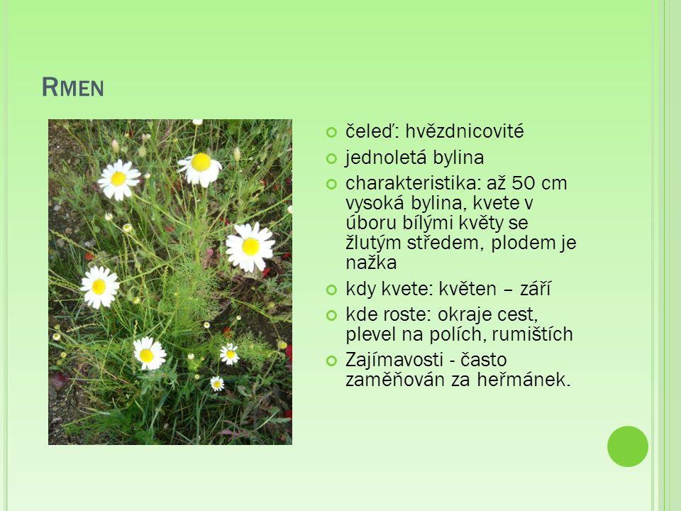 R MEN čeleď: hvězdnicovité jednoletá bylina charakteristika: až 50 cm vysoká bylina, kvete v úboru bílými květy se žlutým středem, plodem je nažka kdy kvete: květen – září kde roste: okraje cest, plevel na polích, rumištích Zajímavosti - často zaměňován za heřmánek.