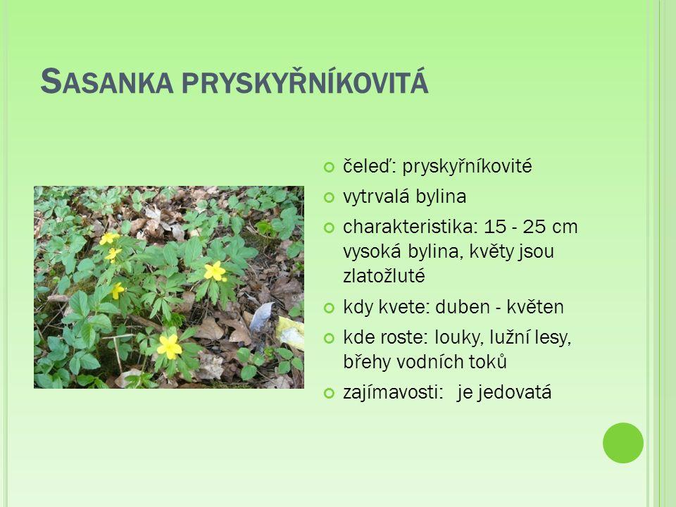 S ASANKA PRYSKYŘNÍKOVITÁ čeleď: pryskyřníkovité vytrvalá bylina charakteristika: 15 - 25 cm vysoká bylina, květy jsou zlatožluté kdy kvete: duben - květen kde roste: louky, lužní lesy, břehy vodních toků zajímavosti:je jedovatá