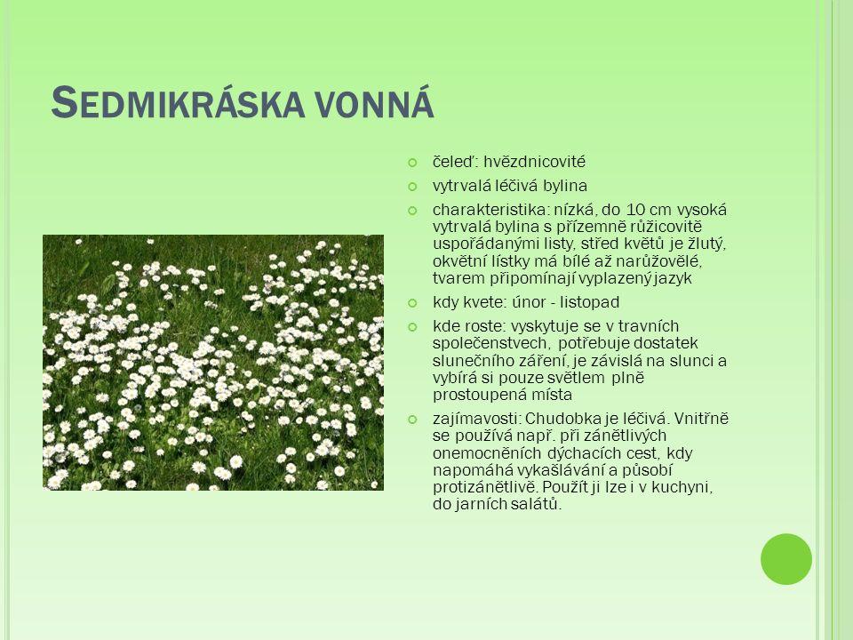 S EDMIKRÁSKA VONNÁ čeleď: hvězdnicovité vytrvalá léčivá bylina charakteristika: nízká, do 10 cm vysoká vytrvalá bylina s přízemně růžicovitě uspořádanými listy, střed květů je žlutý, okvětní lístky má bílé až narůžovělé, tvarem připomínají vyplazený jazyk kdy kvete: únor - listopad kde roste: vyskytuje se v travních společenstvech, potřebuje dostatek slunečního záření, je závislá na slunci a vybírá si pouze světlem plně prostoupená místa zajímavosti: Chudobka je léčivá.