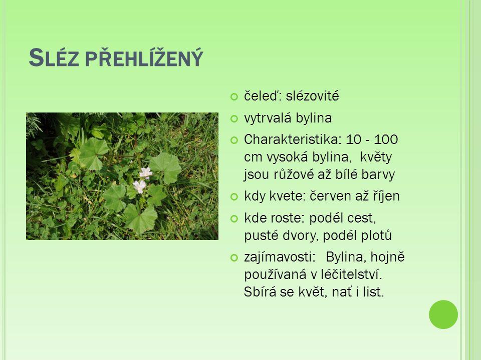 S LÉZ PŘEHLÍŽENÝ čeleď: slézovité vytrvalá bylina Charakteristika: 10 - 100 cm vysoká bylina, květy jsou růžové až bílé barvy kdy kvete: červen až říjen kde roste: podél cest, pusté dvory, podél plotů zajímavosti:Bylina, hojně používaná v léčitelství.