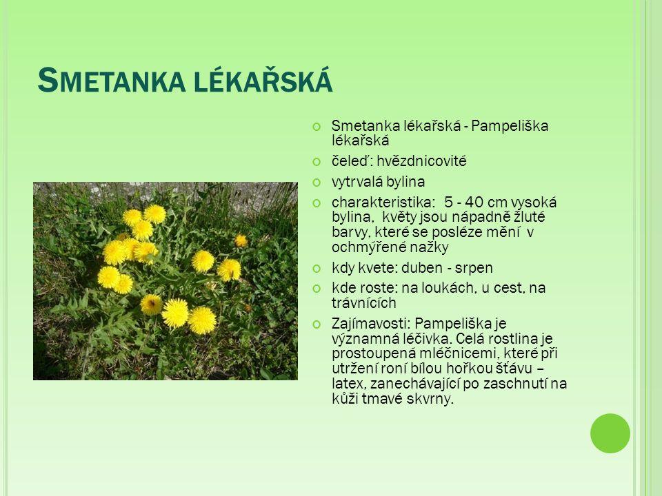 S METANKA LÉKAŘSKÁ Smetanka lékařská - Pampeliška lékařská čeleď: hvězdnicovité vytrvalá bylina charakteristika:5 - 40 cm vysoká bylina, květy jsou nápadně žluté barvy, které se posléze mění v ochmýřené nažky kdy kvete: duben - srpen kde roste: na loukách, u cest, na trávnících Zajímavosti: Pampeliška je významná léčivka.