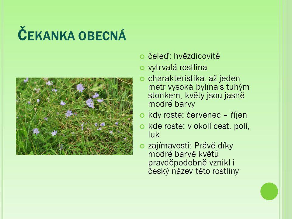 Ř EBŘÍČEK OBECNÝ čeleď: hvězdnicovité charakteristika: Řebříček obecný je bylina dorůstající až 80 cm.