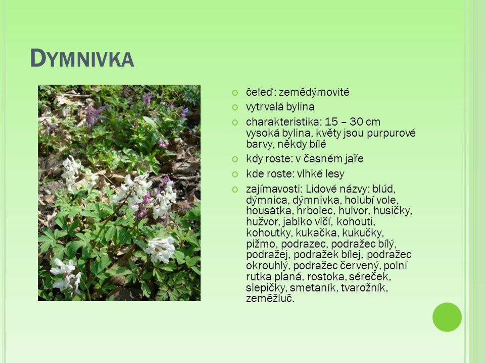 M ÁK VLČÍ čeleď: makovité jednoletá bylina charakteristika: 20 - 90 cm vysoká rostlina, má nápadné květy složené ze čtyř velkých, jasně červených korunních lístků, semena jsou ukryta v 1 - 2 cm velké tobolce tzv.