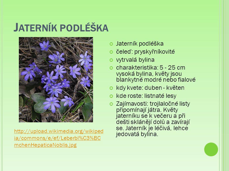 J ATERNÍK PODLÉŠKA Jaterník podléška čeleď: pryskyřníkovité vytrvalá bylina charakteristika: 5 - 25 cm vysoká bylina, květy jsou blankytné modré nebo fialové kdy kvete: duben - květen kde roste: listnaté lesy Zajímavosti: trojlaločné listy připomínají játra.