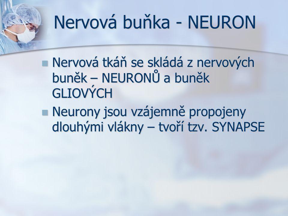 Nervová buňka - NEURON Nervová tkáň se skládá z nervových buněk – NEURONŮ a buněk GLIOVÝCH Nervová tkáň se skládá z nervových buněk – NEURONŮ a buněk GLIOVÝCH Neurony jsou vzájemně propojeny dlouhými vlákny – tvoří tzv.
