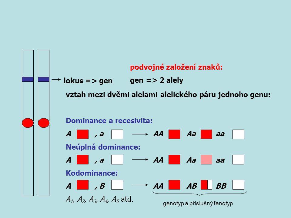 lokus => gen podvojné založení znaků: gen => 2 alely vztah mezi dvěmi alelami alelického páru jednoho genu: Dominance a recesivita: A, aAA Aa aa Neúplná dominance: A, aAA Aa aa Kodominance: A, BAA AB BB A 1, A 2, A 3, A 4, A 5 atd.