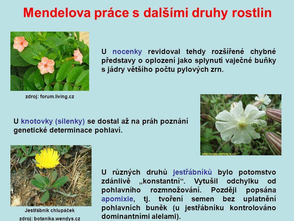 Mendelova práce s dalšími druhy rostlin zdroj: forum.living.cz U nocenky revidoval tehdy rozšířené chybné představy o oplození jako splynutí vaječné buňky s jádry většího počtu pylových zrn.