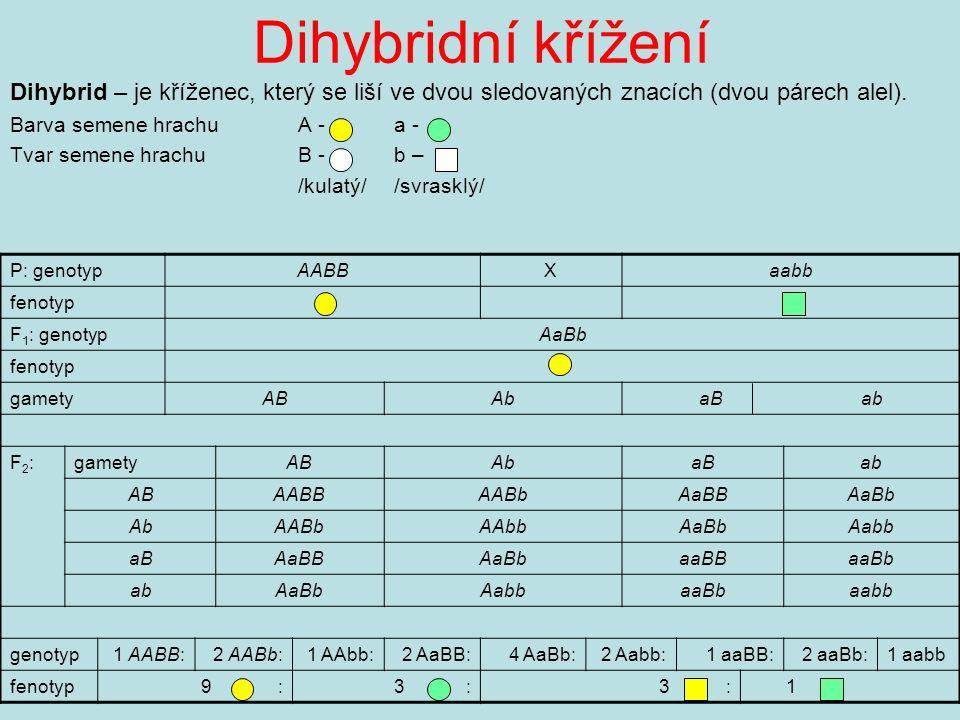 Dihybridní křížení Dihybrid – je kříženec, který se liší ve dvou sledovaných znacích (dvou párech alel).