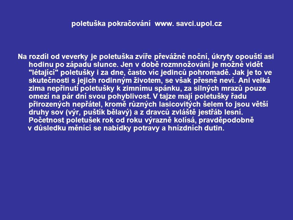 poletuška pokračování www. savci.upol.cz Na rozdíl od veverky je poletuška zvíře převážně noční, úkryty opouští asi hodinu po západu slunce. Jen v dob