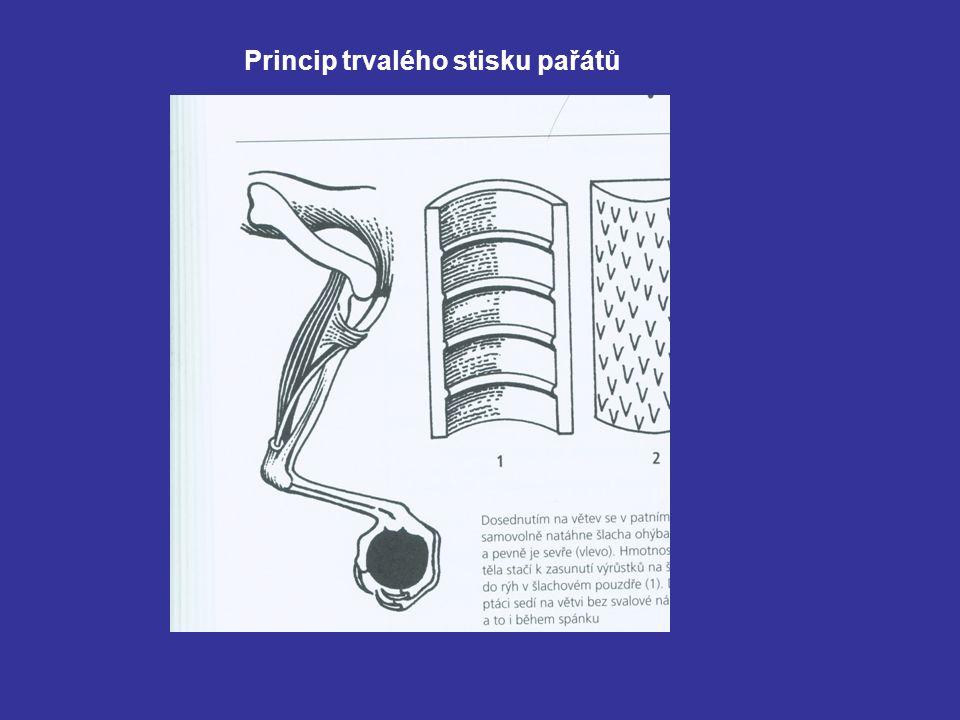 Princip trvalého stisku pařátů