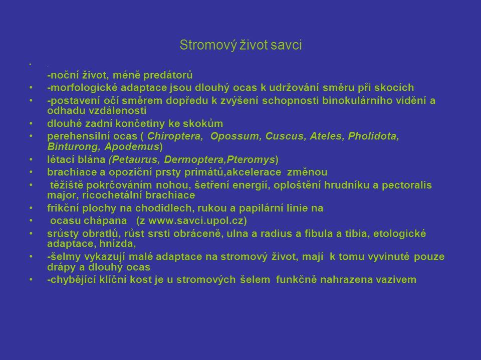 řád:Rodentia; poletuška slovanská (Pteromys volans )