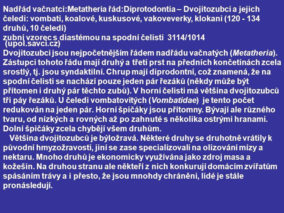 r Nadřád vačnatci:Metatheria řád:Diprotodontia – Dvojitozubci a jejich čeledi: vombati, koalové, kuskusové, vakoveverky, klokani (120 - 134 druhů, 10 čeledí) zubní vzorec s diastémou na spodní čelisti 3114/1014 (upol.savci.cz) Dvojitozubci jsou nejpočetnějším řádem nadřádu vačnatých (Metatheria).