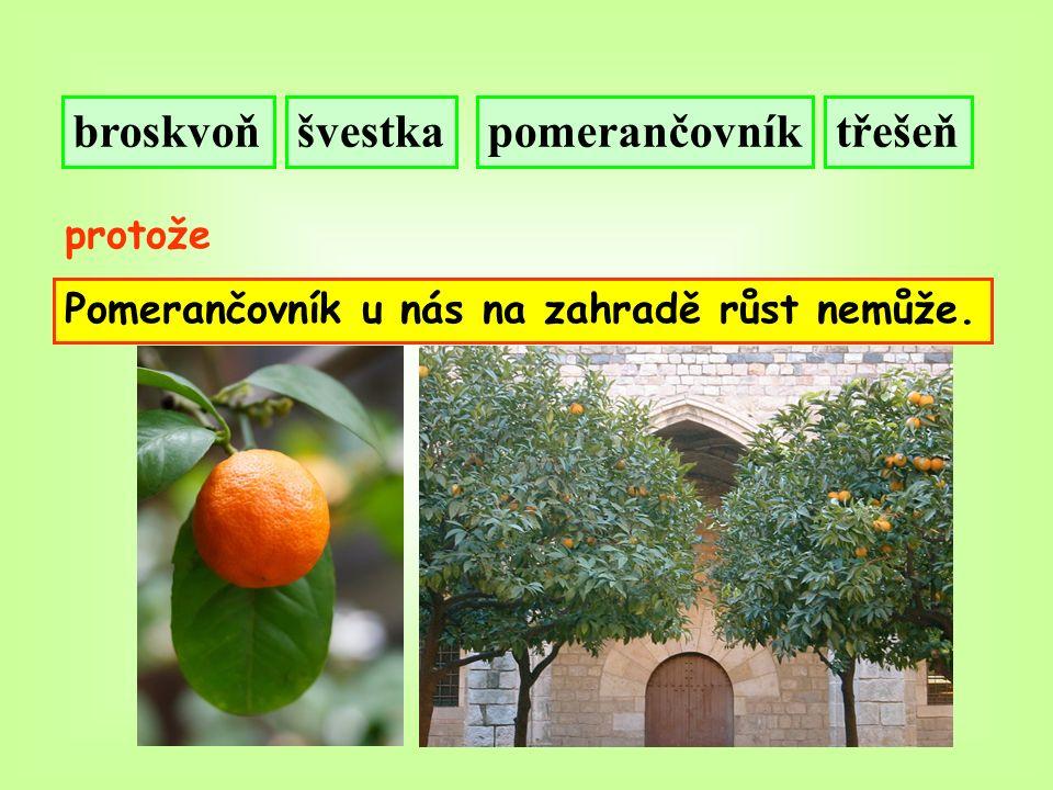 broskvoňšvestkatřešeňpomerančovník protože Pomerančovník u nás na zahradě růst nemůže.