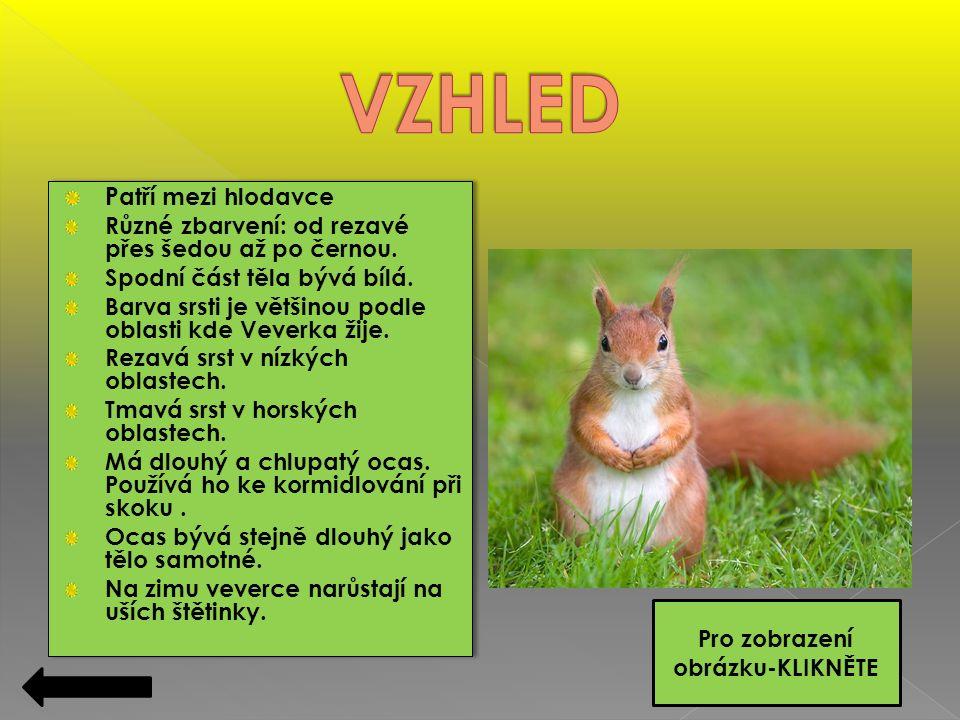  Veverky jsou skoro všude, od nížin až do podhorských oblastí.