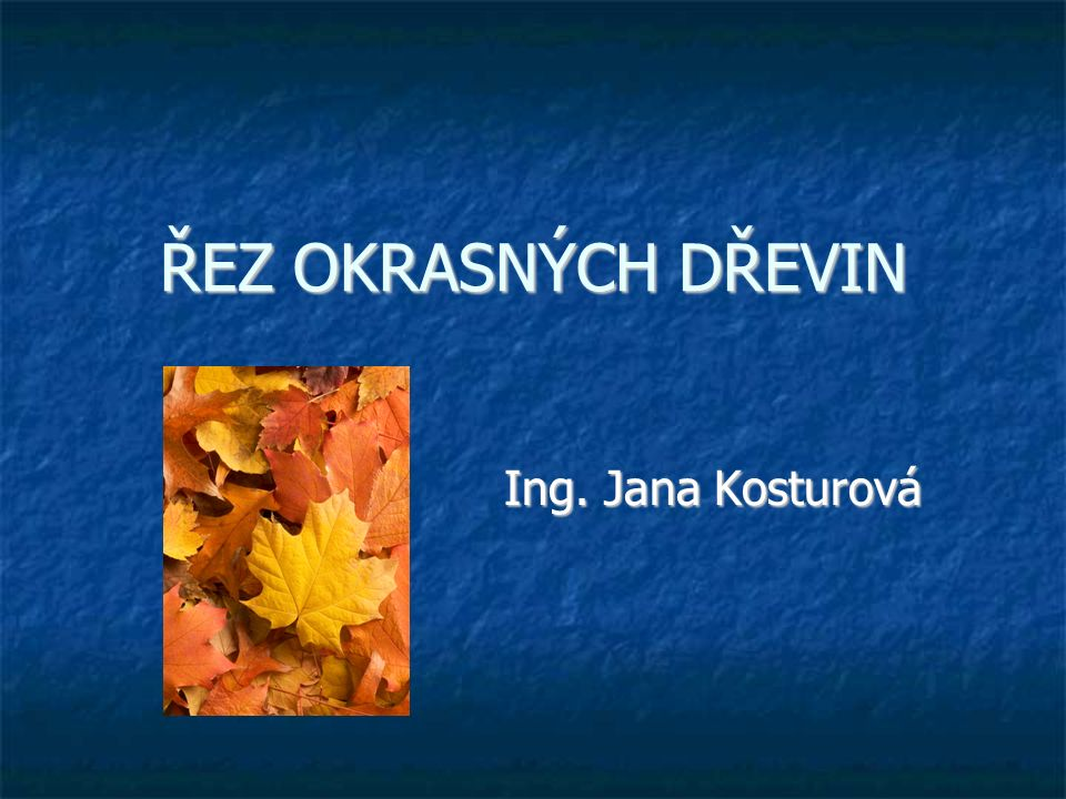 ŘEZ OKRASNÝCH DŘEVIN Ing. Jana Kosturová