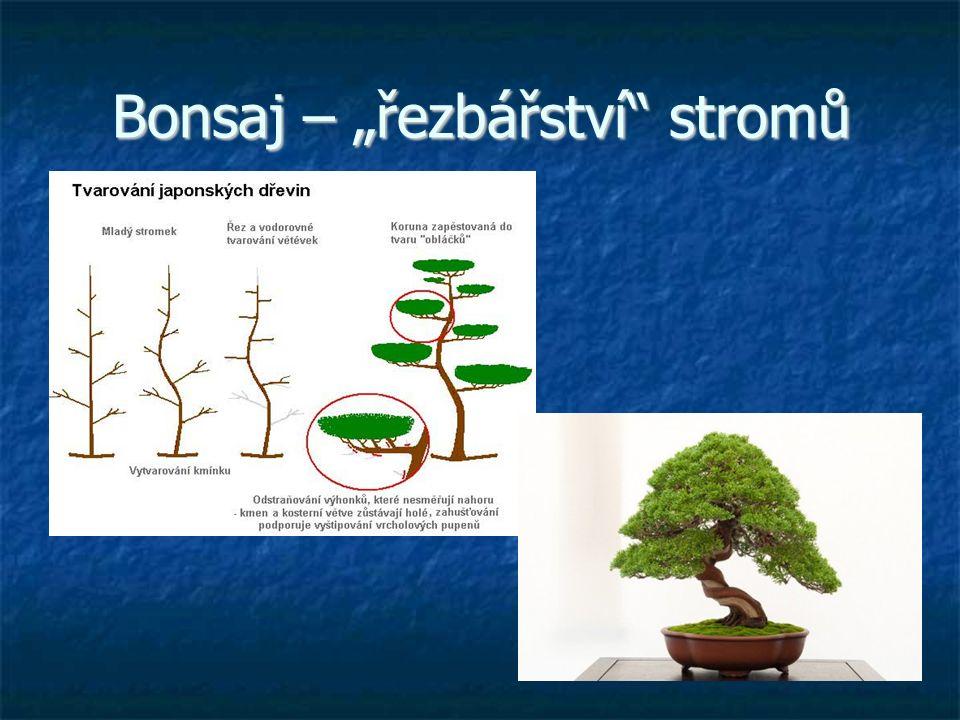 """Bonsaj – """"řezbářství"""" stromů"""