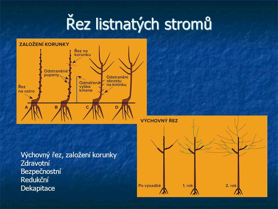 Řez listnatých stromů Výchovný řez, založení korunky Zdravotní Bezpečnostní Redukční Dekapitace