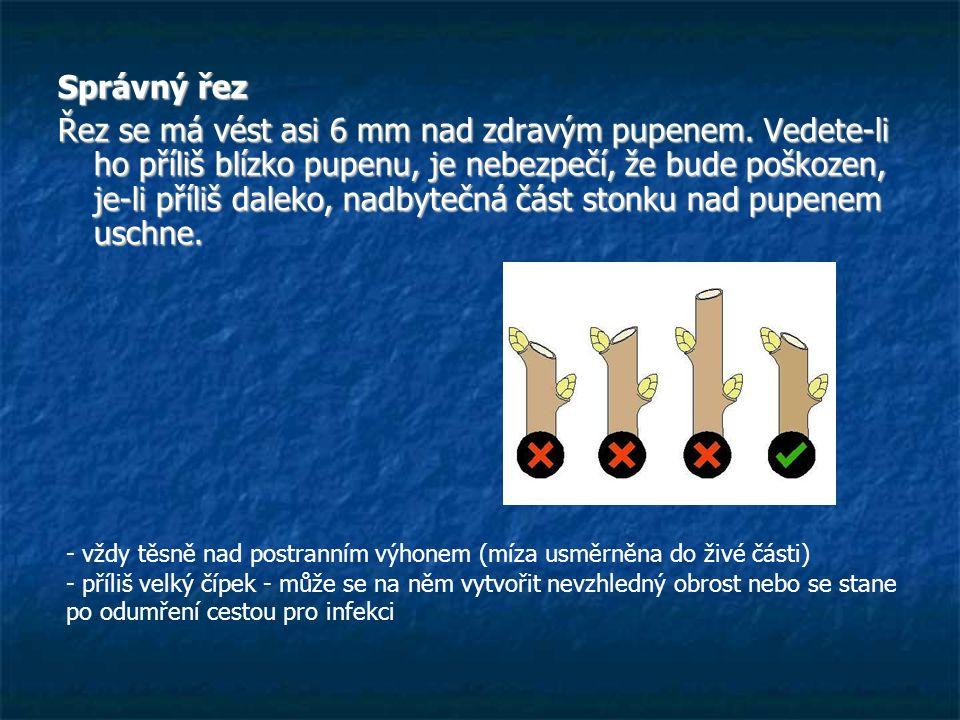Správný řez Řez se má vést asi 6 mm nad zdravým pupenem. Vedete-li ho příliš blízko pupenu, je nebezpečí, že bude poškozen, je-li příliš daleko, nadby