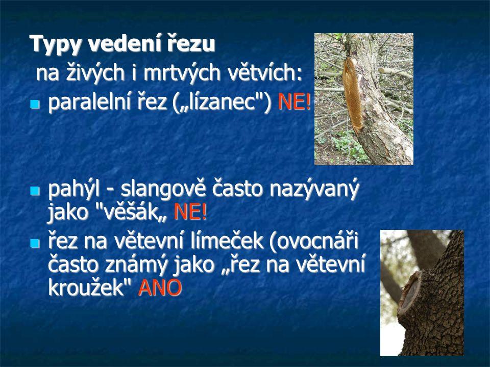 """Typy vedení řezu na živých i mrtvých větvích: na živých i mrtvých větvích: paralelní řez (""""lízanec ) NE."""