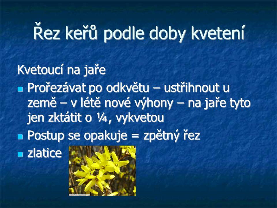 Řez keřů podle doby kvetení Kvetoucí na jaře Prořezávat po odkvětu – ustřihnout u země – v létě nové výhony – na jaře tyto jen zktátit o ¼, vykvetou P