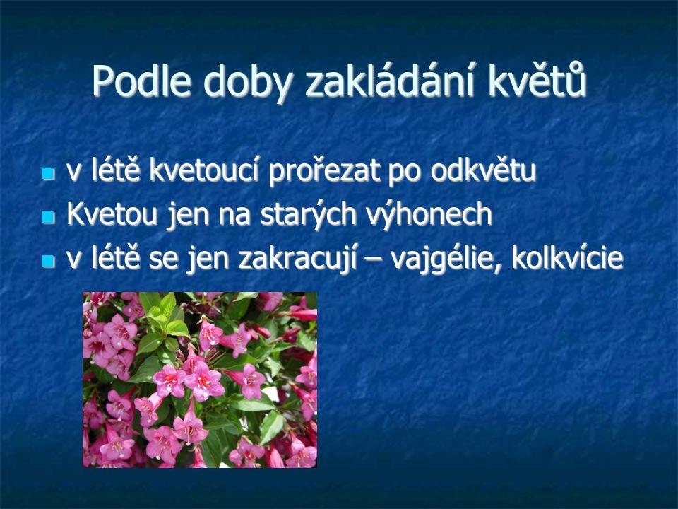Podle doby zakládání květů v létě kvetoucí prořezat po odkvětu v létě kvetoucí prořezat po odkvětu Kvetou jen na starých výhonech Kvetou jen na starých výhonech v létě se jen zakracují – vajgélie, kolkvície v létě se jen zakracují – vajgélie, kolkvície