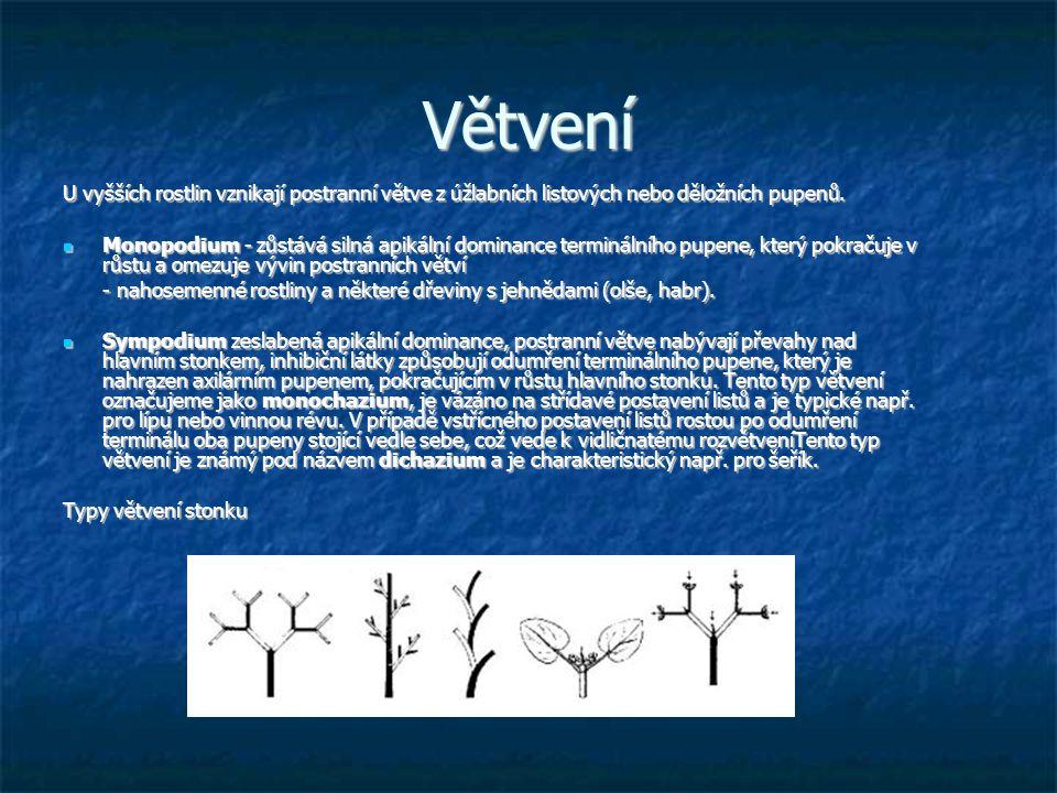 Větvení U vyšších rostlin vznikají postranní větve z úžlabních listových nebo děložních pupenů.