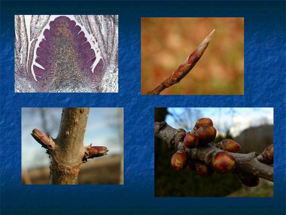 Proč řezat.nově vysazené dřeviny - k vytvoření pěkné koruny vytvářené v průběhu příštích let.