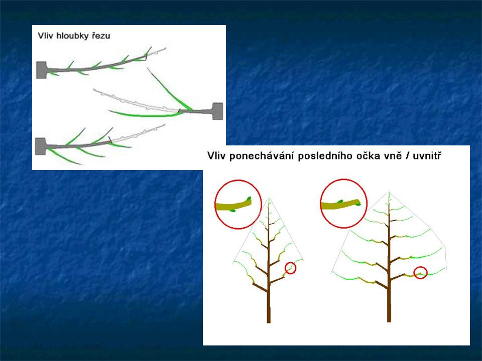 """Bonsaj – """"řezbářství stromů"""