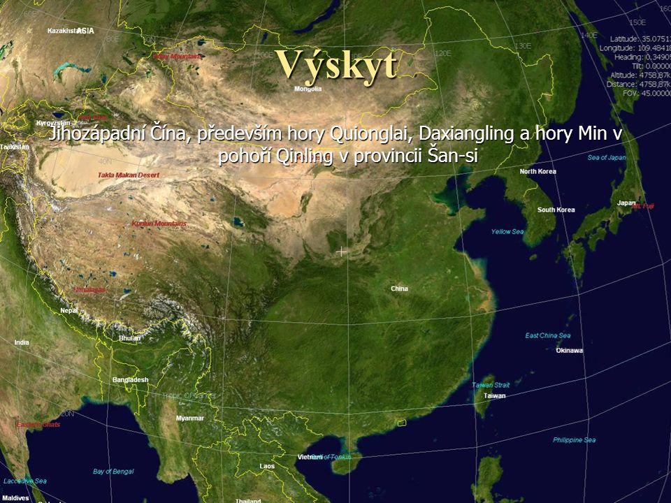 Výskyt Jihozápadní Čína, především hory Quionglai, Daxiangling a hory Min v pohoří Qinling v provincii Šan-si