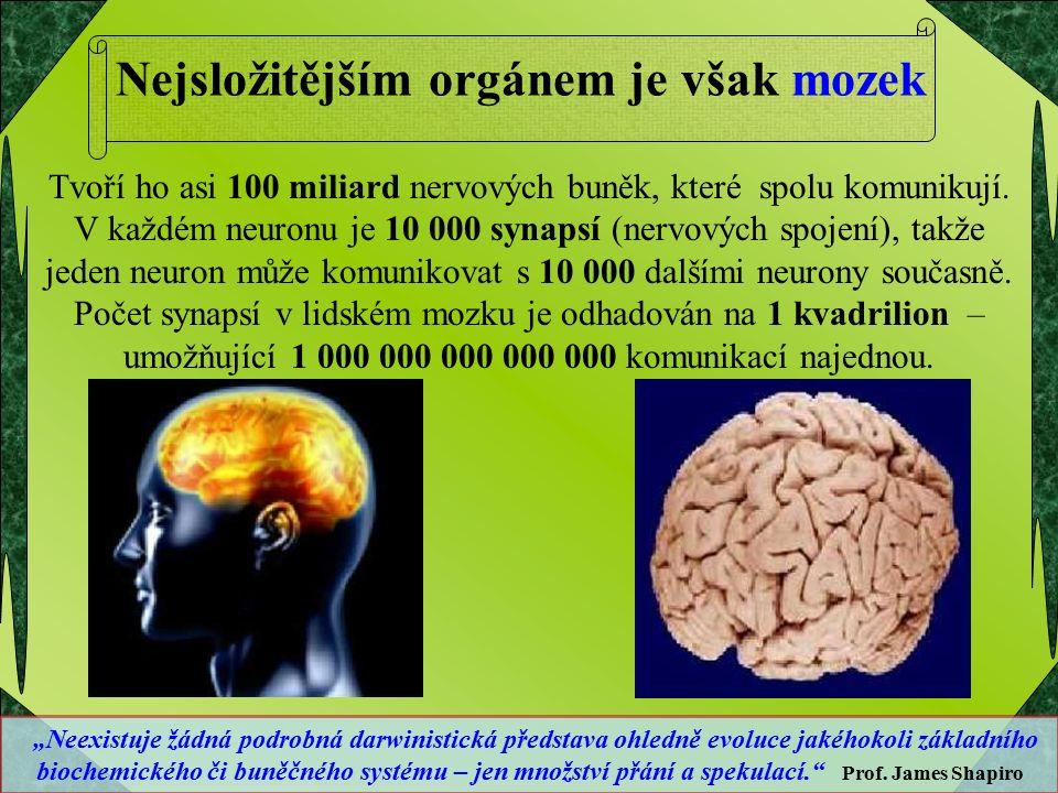 Nejsložitějším orgánem je však mozek Tvoří ho asi 100 miliard nervových buněk, které spolu komunikují. V každém neuronu je 10 000 synapsí (nervových s
