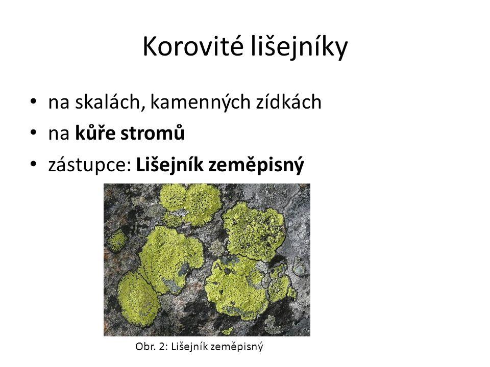 Korovité lišejníky na skalách, kamenných zídkách na kůře stromů zástupce: Lišejník zeměpisný Obr.