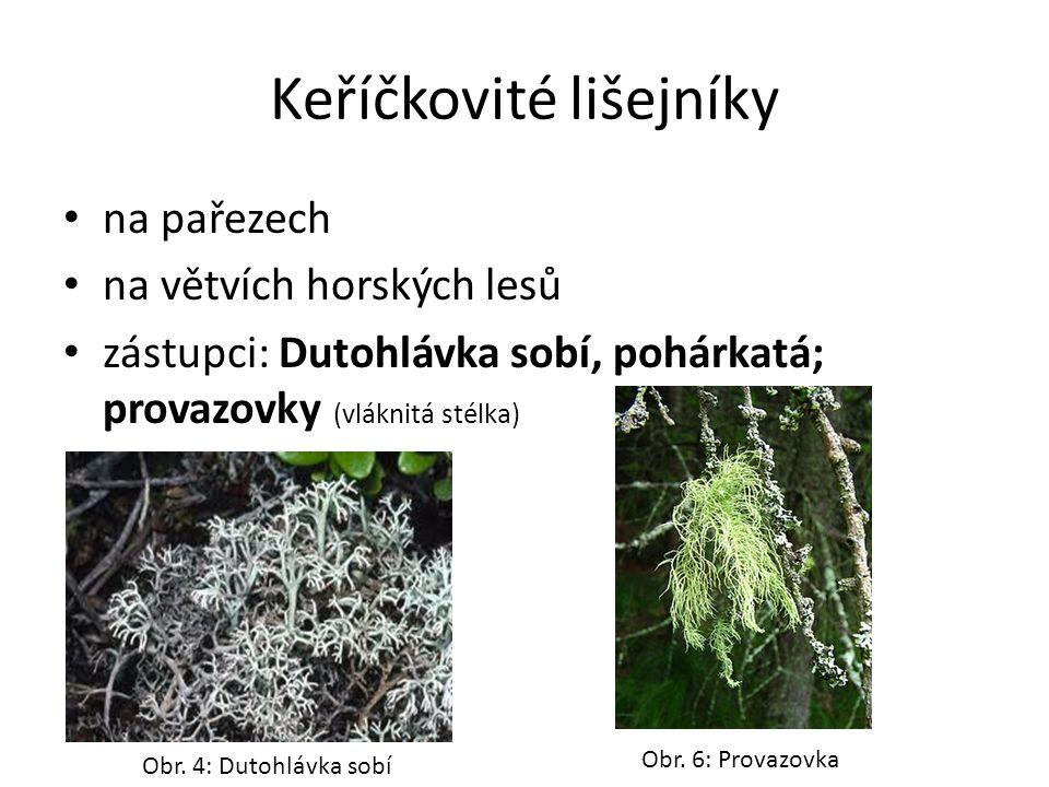 Keříčkovité lišejníky na pařezech na větvích horských lesů zástupci: Dutohlávka sobí, pohárkatá; provazovky (vláknitá stélka) Obr.