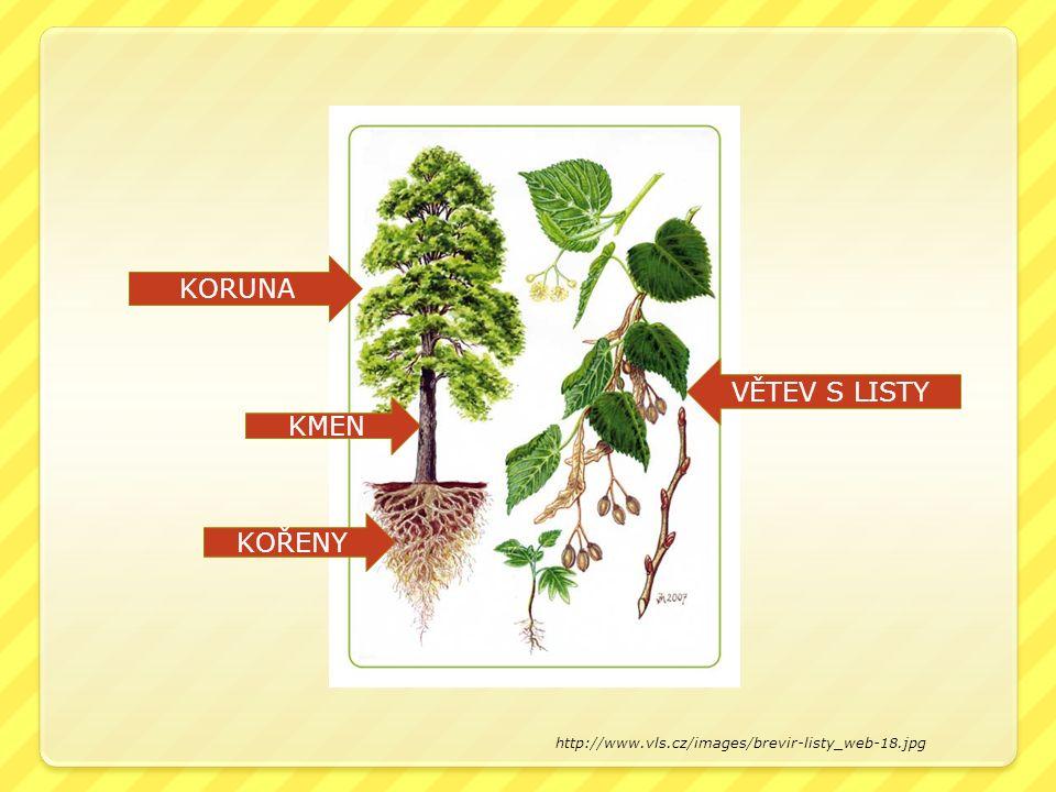 Anotace Materiál obsahuje prezentaci listnatých stromů, keřů a ovocných stromů.