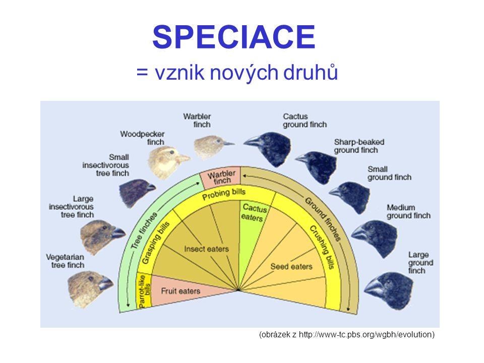 SPECIACE = vznik nových druhů (obrázek z http://www-tc.pbs.org/wgbh/evolution)