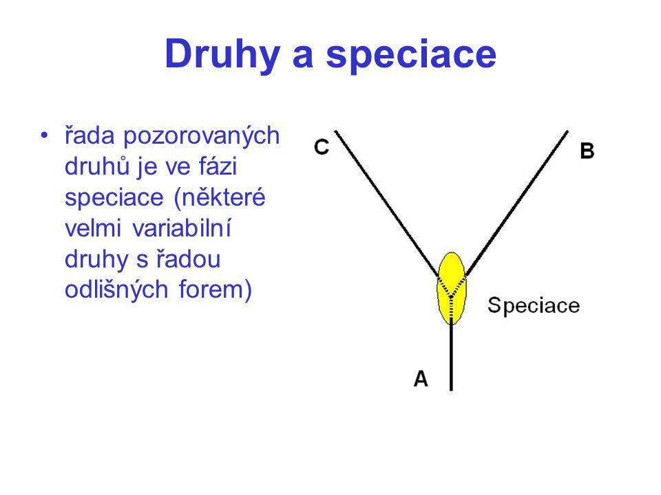 Druhy a speciace řada pozorovaných druhů je ve fázi speciace (některé velmi variabilní druhy s řadou odlišných forem)