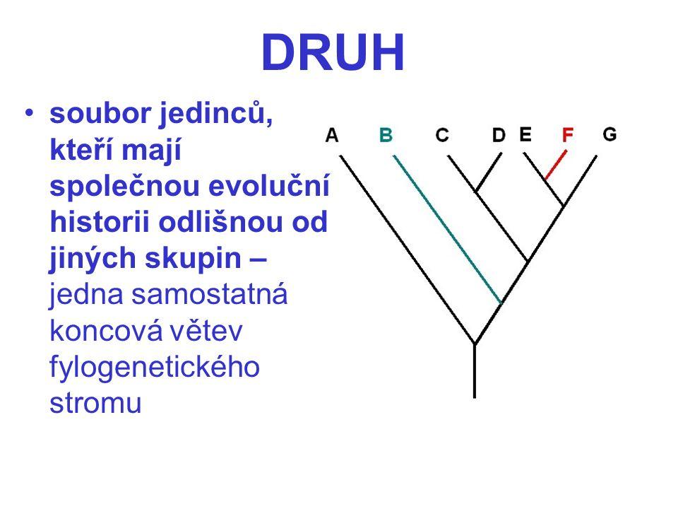 soubor jedinců, kteří mají společnou evoluční historii odlišnou od jiných skupin – jedna samostatná koncová větev fylogenetického stromu DRUH