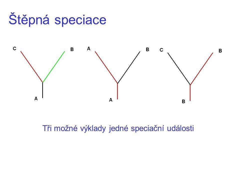 Štěpná speciace Tři možné výklady jedné speciační události