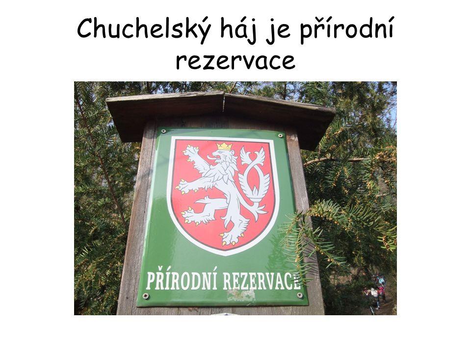 """Chuchelský háj – """"sám o sobě Najdeme ho nad levým břehem Vltavy v oblasti mezi Velkou a Malou Chuchlí."""