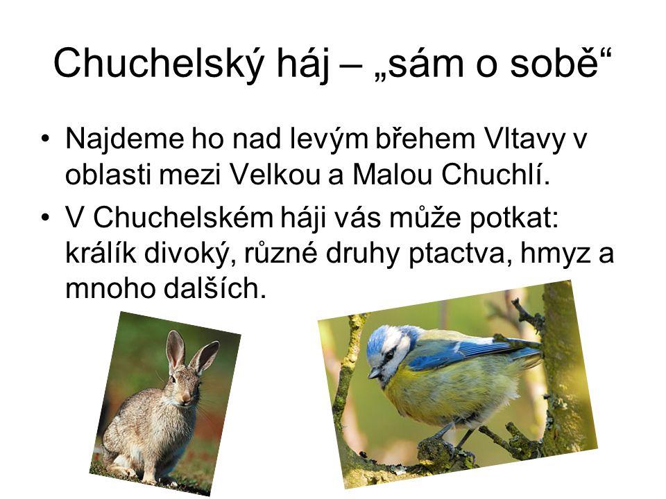 """Chuchelský háj – """"sám o sobě"""" Najdeme ho nad levým břehem Vltavy v oblasti mezi Velkou a Malou Chuchlí. V Chuchelském háji vás může potkat: králík div"""
