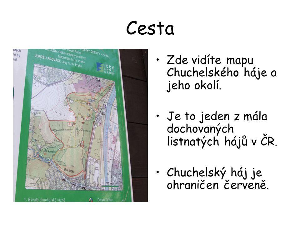 Cesta Zde vidíte mapu Chuchelského háje a jeho okolí. Je to jeden z mála dochovaných listnatých hájů v ČR. Chuchelský háj je ohraničen červeně.