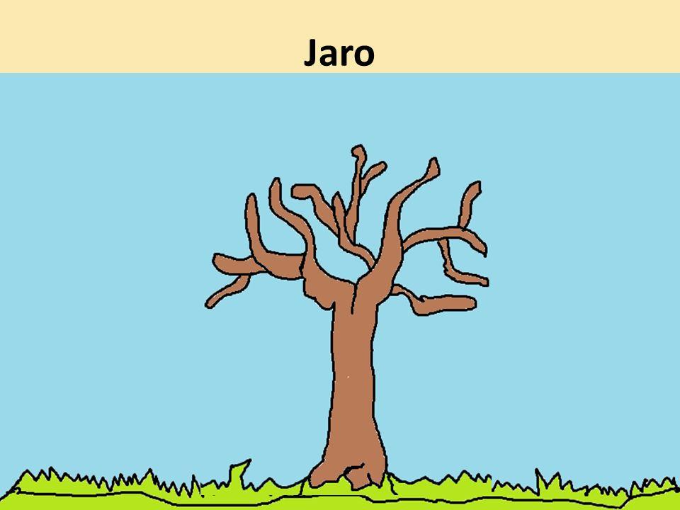 Jak si žije strom po celý rok ?