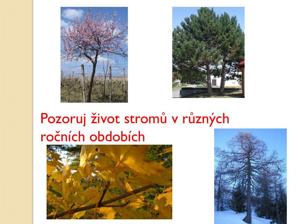 Raší listy Stromy kvetou Jaro - stromy se probouzejí